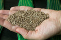 Cumin in hand Royalty Free Stock Photo