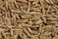 Cumin Seed Royalty Free Stock Photo
