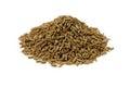 Cumin seed Royalty Free Stock Photo