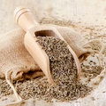 Cumin seeds in wooden scoop Royalty Free Stock Photos