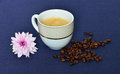 Cup of black coffee and chrysanthemum flower beans on a blue tablecloth Royalty Free Stock Image