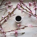 A cup of coffe with cherry blossom Royalty Free Stock Photo