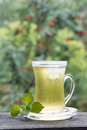 Cup of cold green tea with ice and mint misted glass Stock Image