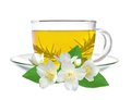 Cup of green tea with jasmine flowers isolated on white Royalty Free Stock Photo
