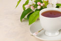 Cup of tea or coffee with crabapple blossoms with copy space horizontal a in white china on off white tablecloth and leaves behind Royalty Free Stock Photo