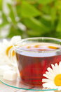 Cup of tea and daisy Royalty Free Stock Photo