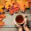 Cup of tea in hand, colorful autumn leaves on wooden board. Fall still life. Top view. Royalty Free Stock Photo