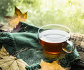 Cup of tea on a wooden rain window sill with a green cloth and autumn leaves on a natural background Royalty Free Stock Photo