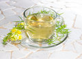 Cup of yellopw toadflax infusion or linaria vulgaris or tea in a clear glass used in naturopathy as a diuretic and laxative Royalty Free Stock Images
