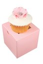 Cupcake on box with white background Stock Photos