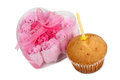 Cupcake and candle fresh sweet with a on a white background Stock Images