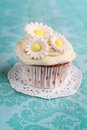 Cupcake with flowers daisy on top on a turquoise background Stock Images