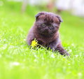 Cure kitten sitting near flower outdoors summer green background Stock Image
