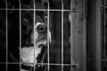 Curios dog inside a cage Royalty Free Stock Photography