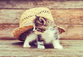 Curiosity kitten under hat little sitting the straw on wooden background Stock Images