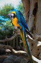 Curious big parrot on a branch Stock Photo