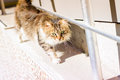 Curious and careful alley cat portrait photography of a striped Royalty Free Stock Photos