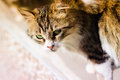 Curious and careful alley cat portrait photography of a striped Stock Photos