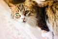 Curious and careful alley cat portrait photography of a striped Stock Image