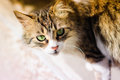 Curious and careful alley cat portrait photography of a striped Stock Photography
