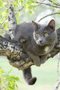 Curious cat on a tree Royalty Free Stock Photo
