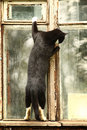 Curious cat in the window Royalty Free Stock Photo