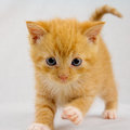 Curious kitten red striped staring at you Stock Photo