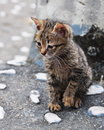 Curious little kitten Royalty Free Stock Photo