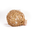 Curious little mouse hides behind the decorative ball Royalty Free Stock Photo
