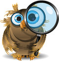 Curious owl Stock Photos