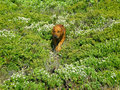 Curious puppy 库存照片