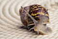 Curious snail crawling on table looking around curiously Stock Photo