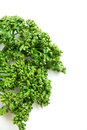 Curled parsley on a white background Royalty Free Stock Photos