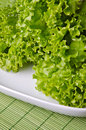 Curly green salad Royalty Free Stock Photos