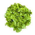 Curly leaf lettuce isolated or butterhead on white overhead view Royalty Free Stock Photography