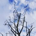 Curly leafless tree