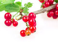 Currant isolated on white background Stock Photography
