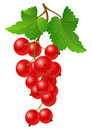 Currant red on bench Royalty Free Stock Photography