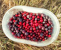 Currants and blueberries in small container on the grass Royalty Free Stock Photo