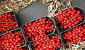 Currants packed for market Royalty Free Stock Photography