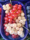 Currants red and white Royalty Free Stock Image