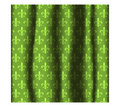 Curtain with pattern Royalty Free Stock Photo