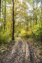 Curvature rural road deep in the forest autumn shot with amazing colors Stock Photo