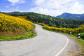 Curve road on a mountain the hill with flowers by the roadside front of the mountains and forests Royalty Free Stock Images