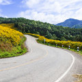 Curve road on a mountain the hill with flowers by the roadside front of the mountains and forests Stock Photography
