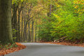 Curved autumn road in Dutch national park Veluwe Royalty Free Stock Photo