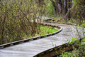Curved boardwalk a forms part of a trail through wetlands Royalty Free Stock Photos