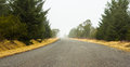 Curved country side road pine trees ends misty background Stock Photo