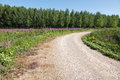 Curved dirt road with flowers and forest empty blue sky Stock Photo
