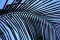 Curved palm frond creates abstract pattern against a blue sky Royalty Free Stock Photo